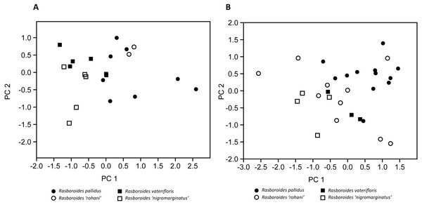 Plot of scores from the principal component analysis of size corrected measurements from putative species of (A) females, and (B) males of Rasboroides in Sri Lanka.