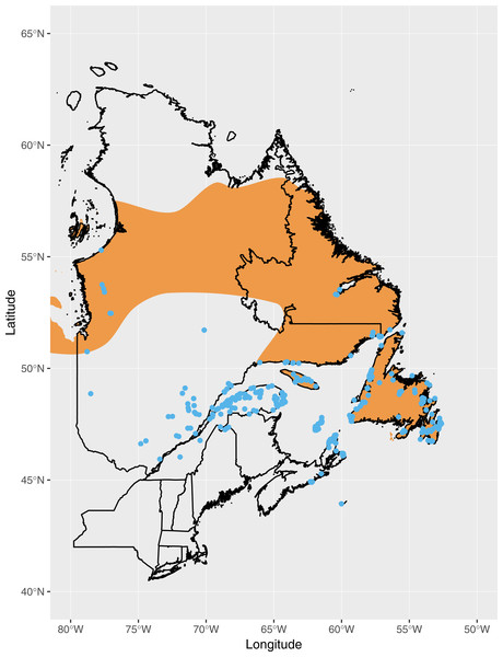 Observations of Fox Sparrow during June and July in eastern Canada reported to eBird as of July 1990 (blue points), the approximate point at which observations of Fox Sparrows during the summer began increasing in Maine.