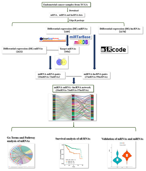 Flow chart of construction and analysis of ceRNA network.