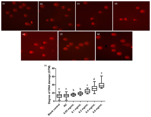 Comet assay to detect DNA damage in T. thermophila cells exposed to gelsemine.