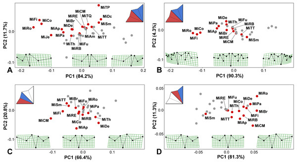 PCA ordination plots showing the differences in positional asymmetry of the adjacent lateral sublobes.