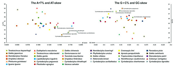 AT-skew versus A+T% and GC-skew versus G+C% in Cyrtodactylus and gecko lizard mitochondrial genomes (mitogenomes).
