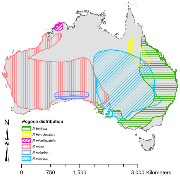 Known distribution of Pogona georeferenced from Wilson & Swan (2013).