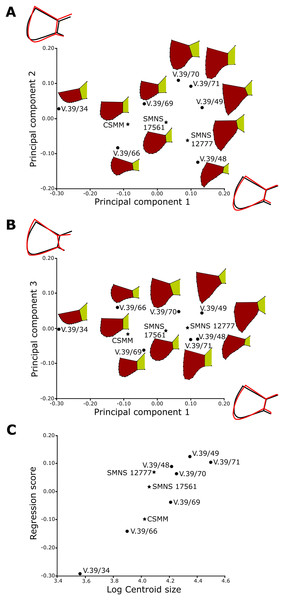 Results of the Principal Component Analysis of the caudal plastral region.