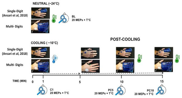 Schematic representation of the experimental protocol to assess modulation in corticomotor excitability in response to distal cooling.