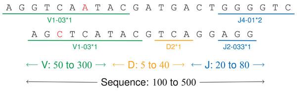 V(D)J recombinations.