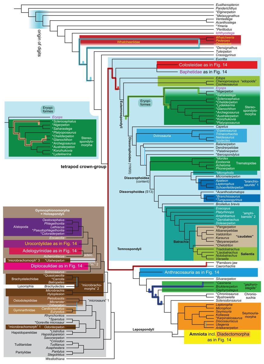 Phylogeny of Paleozoic limbed vertebrates reassessed through
