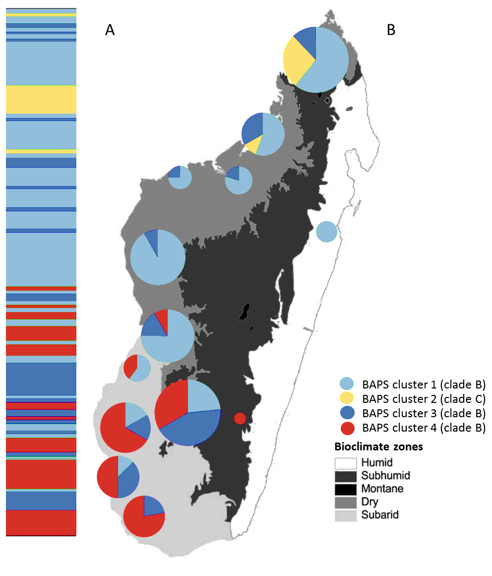 Phylogeography and population genetics of the endemic