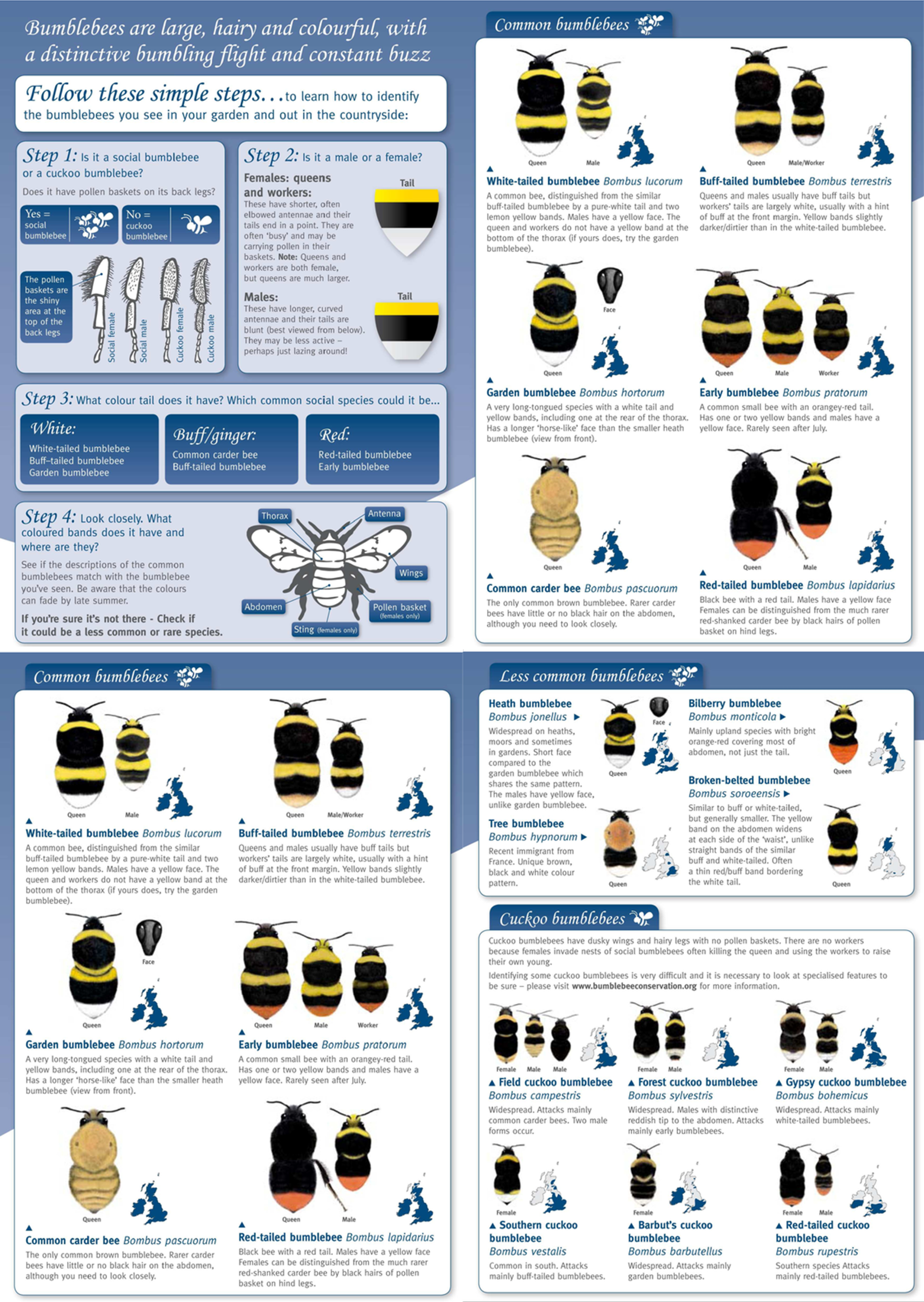 Designing online species identification tools for biological