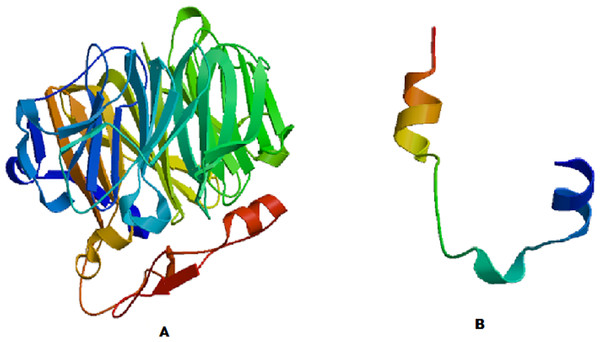 Modeled structures of (A) COR1A and (B) TYB4.