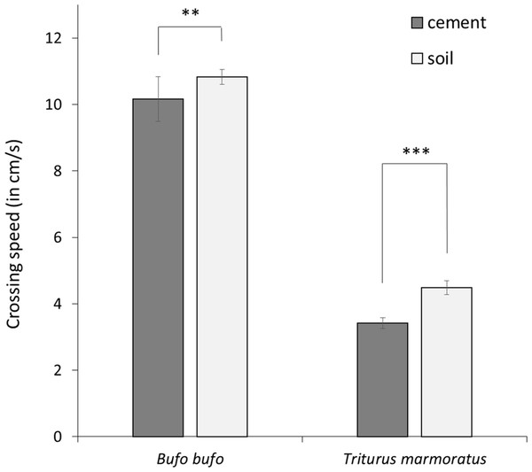 Mean crossing speed (in cm/s) on concrete and soil substrates in the common toad and the marbled newt.