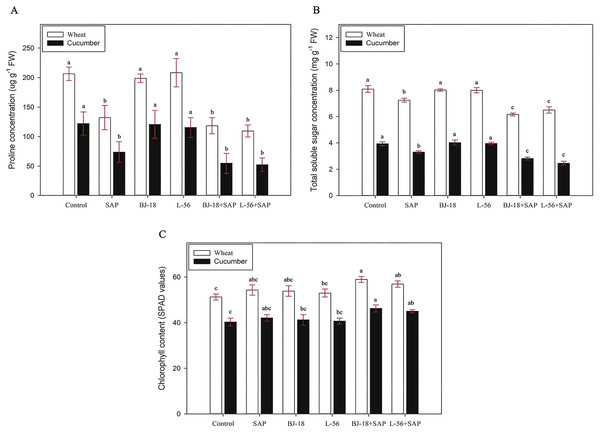 Effects of super absorbent polymer supply on proline concentration (A), total soluble sugar concentration (B), chlorophyll content (C) of wheat and cucumber seedlings.