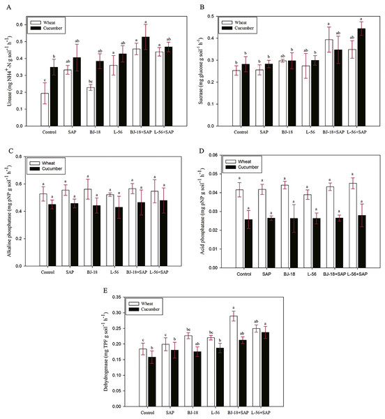 Effects of super absorbent polymer supply on enzyme activities of urease (A), sucrose (B), alkaline phosphatase (C), acid phosphatase (D) and dehydrogenase (E) of rhizosphere soil.