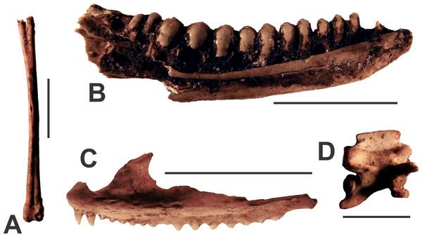 Herpetological taxa from the Manning Karst Region.
