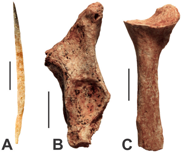 Monotremes from the Manning Karst Region.