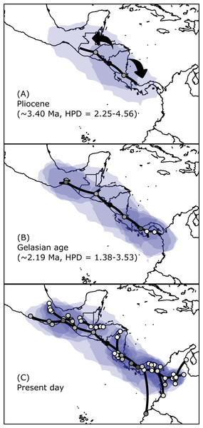 Spatial projection of the Bayesian spatiotemporal diffusion analysis of H. fleischmanni.