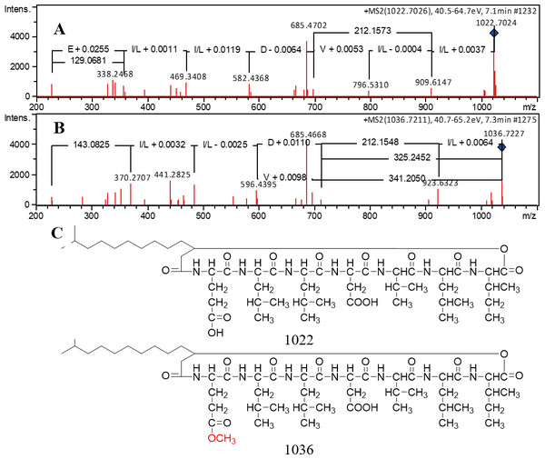 The MS/MS spectra of predicted pumilacidin analogs and the predicted structures.