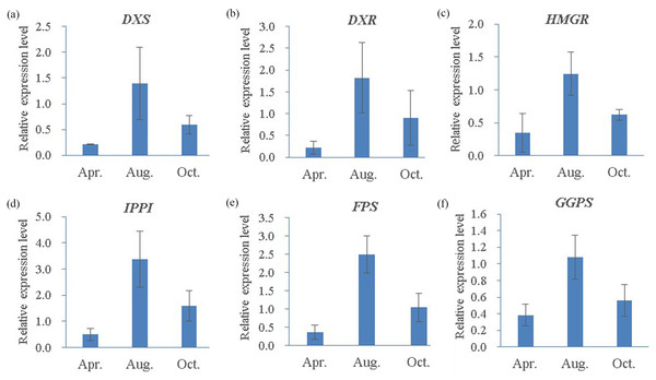 Quantitative RT-PCR analysis of six candidate genes in three different oleoresin-yielding stages (Apr., Aug. and Oct.).