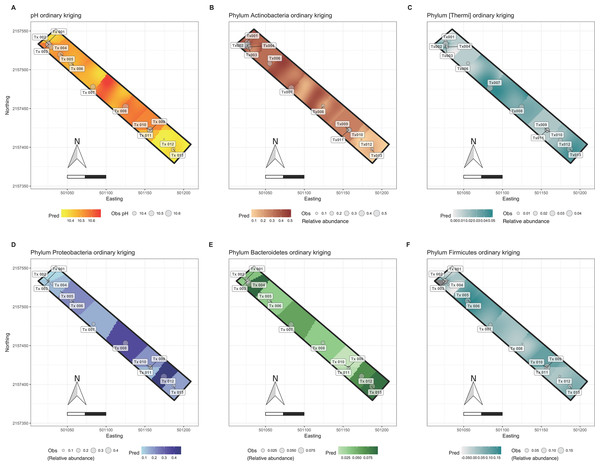 Ordinary kriging maps for pH and some bacterial phyla.