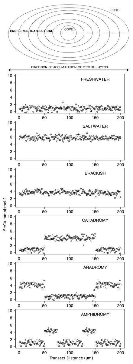 c05b055e97b59 Idealized representations of resident and diadromous life-histories as  expected in otolith microchemistry results.