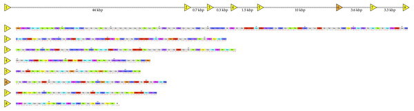 Structure of the NAD glycohydrolase gene from the genome of Protobothrops mucrosquamatus (Aird et al., 2017a), showing locations of the 8 exons, and the amino acid sequence of the enzyme expressed in the venom glands.