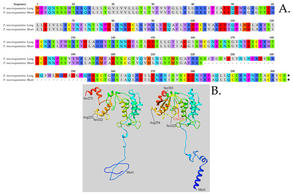 In Protobothrops mucrosquamatus, the 8-exon gene is transcribed into a long NADase and a shorter form that lacks exon 6.
