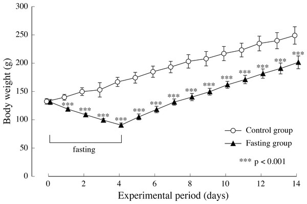 Body weight of rats in the experimental period.