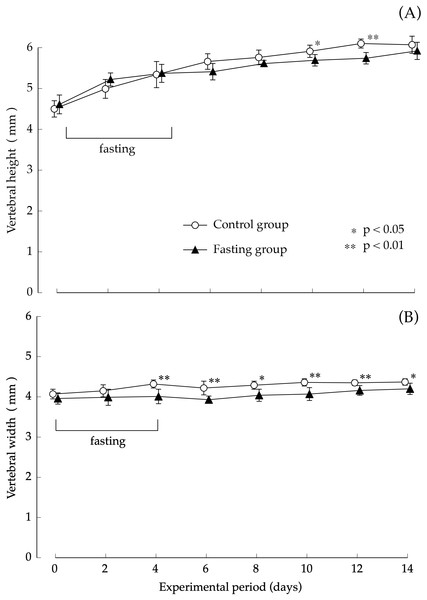 Vertebral body height and vertebral body width of rats in the experimental period.