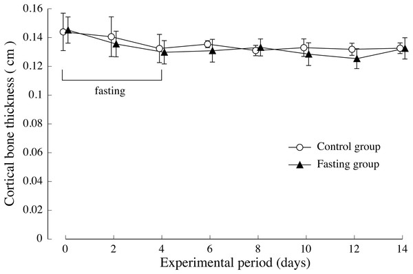 Cortical bone thickness of rats in the experimental period.