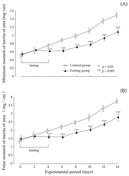 Minimum cross-sectional moment and polar moment of rats in the experimental period.
