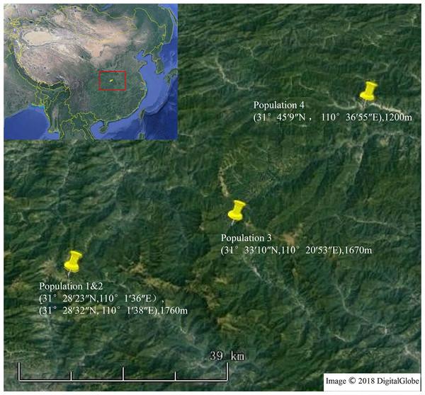 Four sampling locations in Shennongjia, Hubei Province, China.
