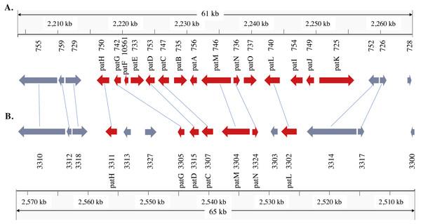 Patulin gene cluster in Penicillium expansum (A) and P.solitum (B).