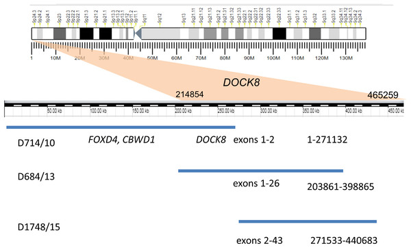 Duplication of the gene DOCK8 in three unrelated patients.