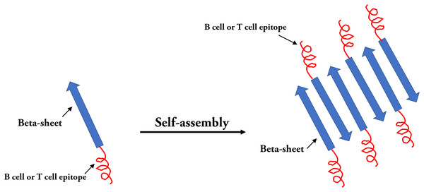 Self-assembled peptides nanoparticles (SAPNs).