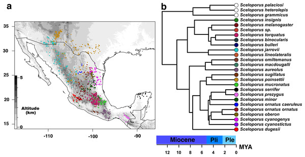 Current distribution of species of the Sceloporus torquatus group.