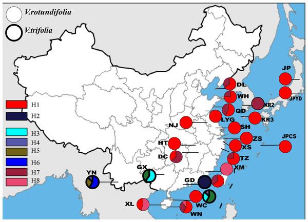 Geographic distribution of the cpDNA haplotypes in V. rotundifolia and V. trifolia.
