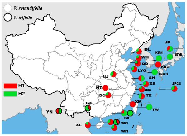 Geographic distribution of the nrDNA haplotypes in V. rotundifolia and V. trifolia.