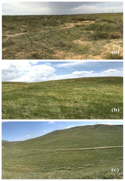 The three types of grasslands investigated in this study.