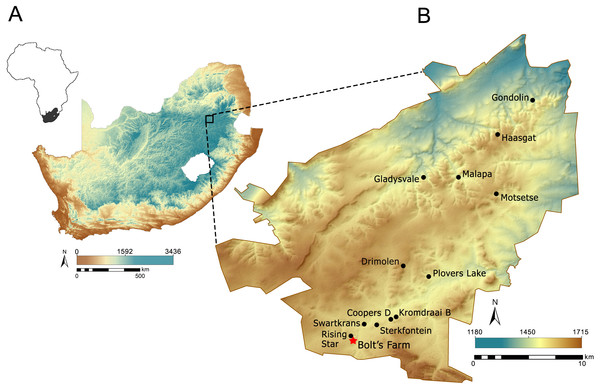 Location of the Cradle in South Africa (A) and Bolt's Farm within the Cradle (B). Elevation data made available from Jarvis et al. (2008).