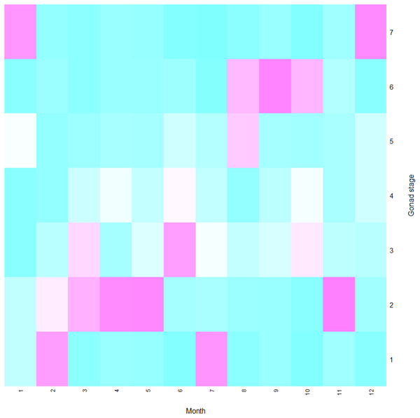 Heatmap of gonad stages of female Procambarus clarkii in different months.