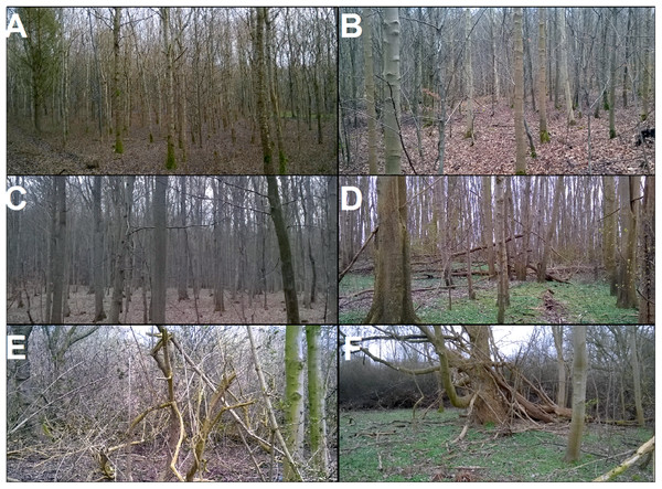 Photos of the managed stands and selected zones of Vorsø.