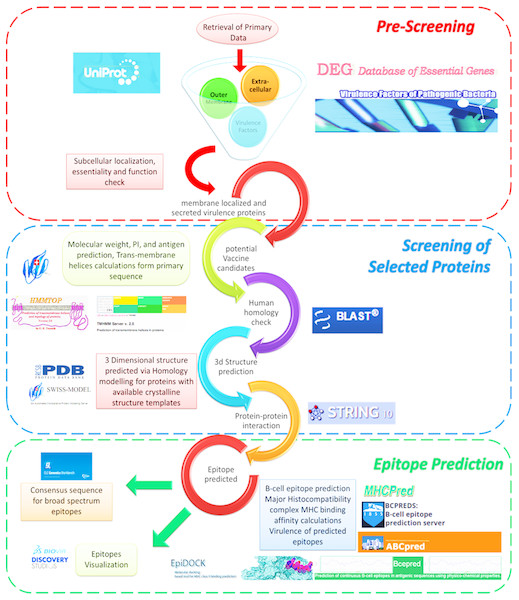 Reverse vaccinology screening process overview.