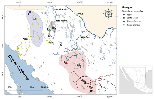 Drainage basins sampled for P. promelas and genetic lineages found.