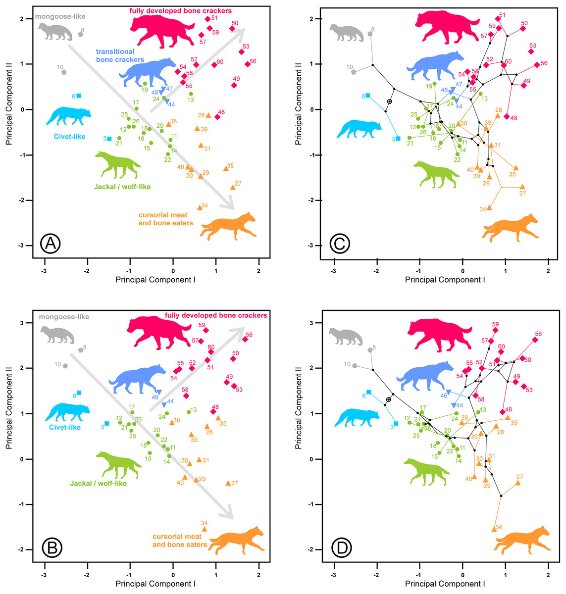Characterizing Ecomorphological Patterns In Hyenids: A