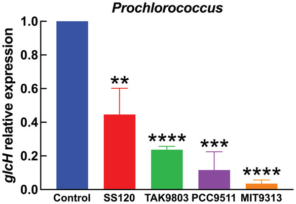 Effect of darkness on glcH expression in Prochlorococcus.