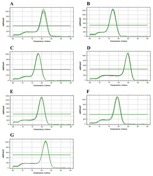 Melting curve analyses of seven candidate reference genes of Radopholus similis for qPCR.