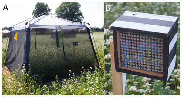 Field enclosure with nest box (A) and a close up of a nest box (B) used for semi-field experiments with Megachile rotundata in this study.