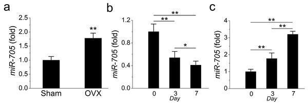 miR-705 is enhanced in MSCs from osteoporosis bone marrow.
