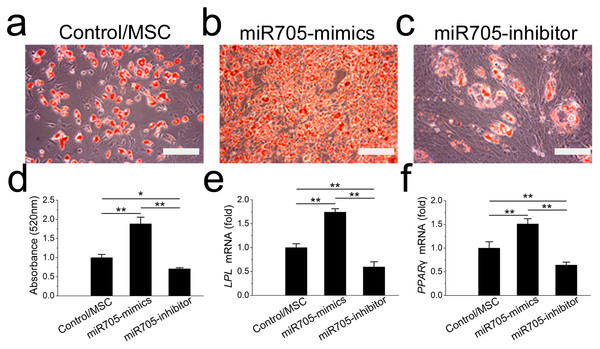 miR-705 promotes adipocyte differentiation of MSCs.