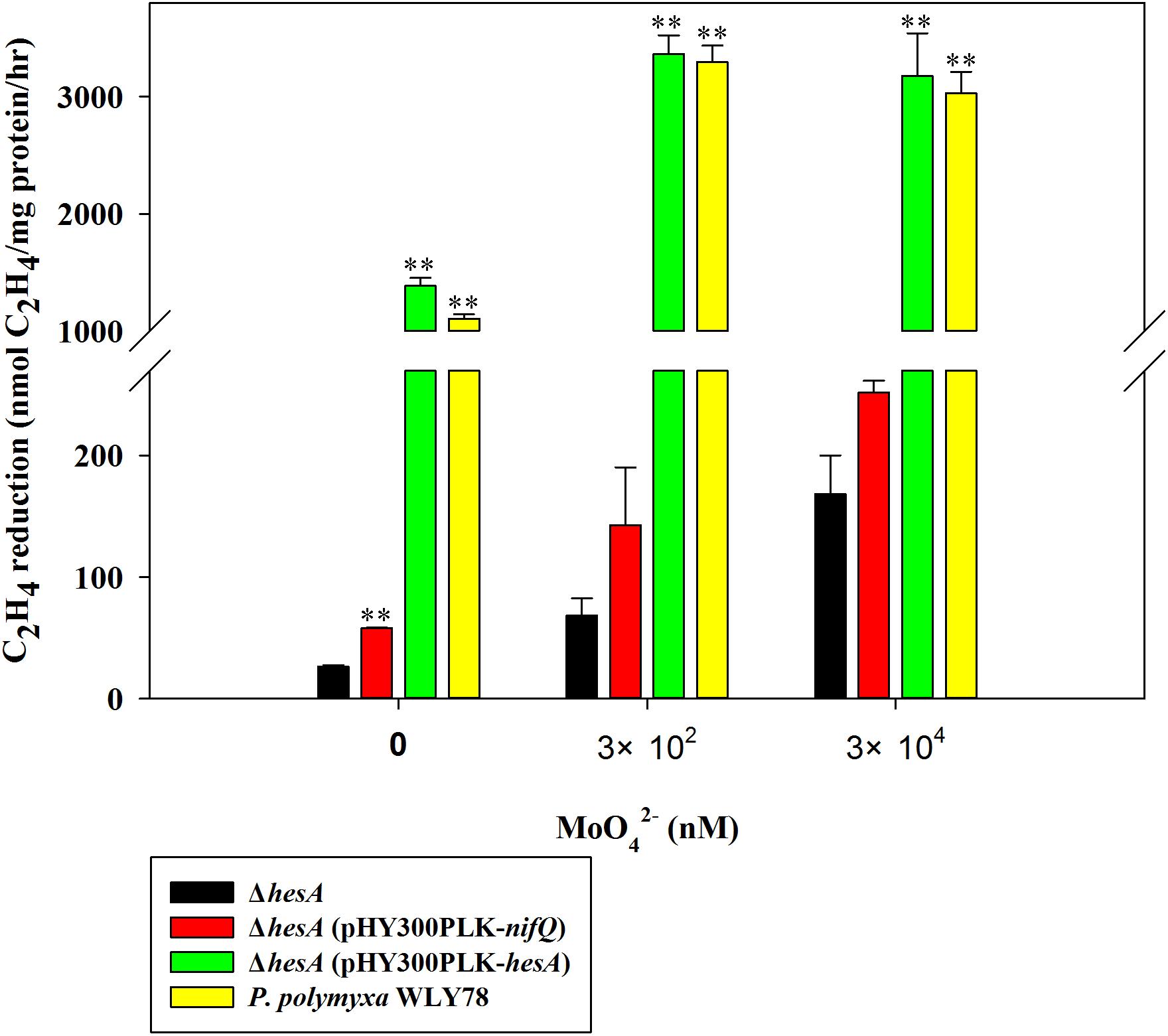 Suppression of hesA mutation on nitrogenase activity in